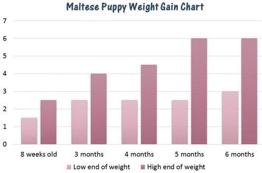 Puppies Chart Ibovnathandedecker