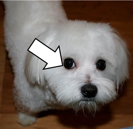 Does Dog Food Make Dogs Shed