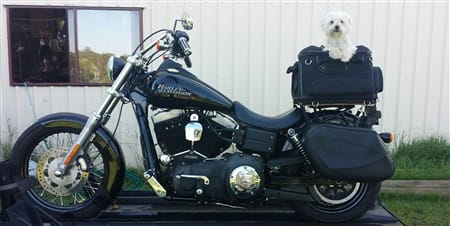 maltese-dog-on-motorcycle