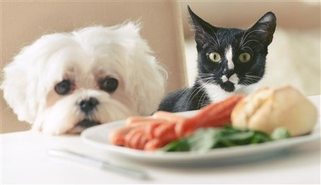 Having A Maltese And A Cat