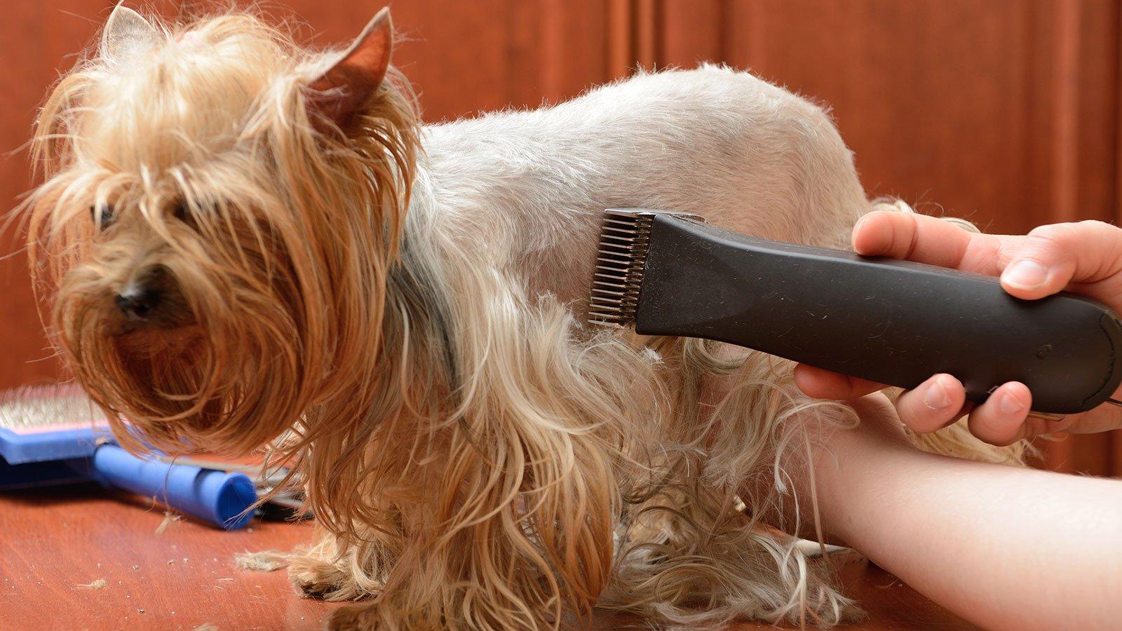Cura dei capelli del cane