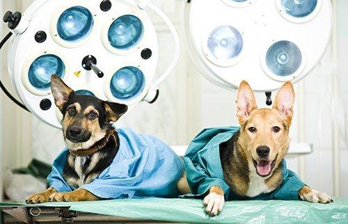 due cani con camice da chirurgo