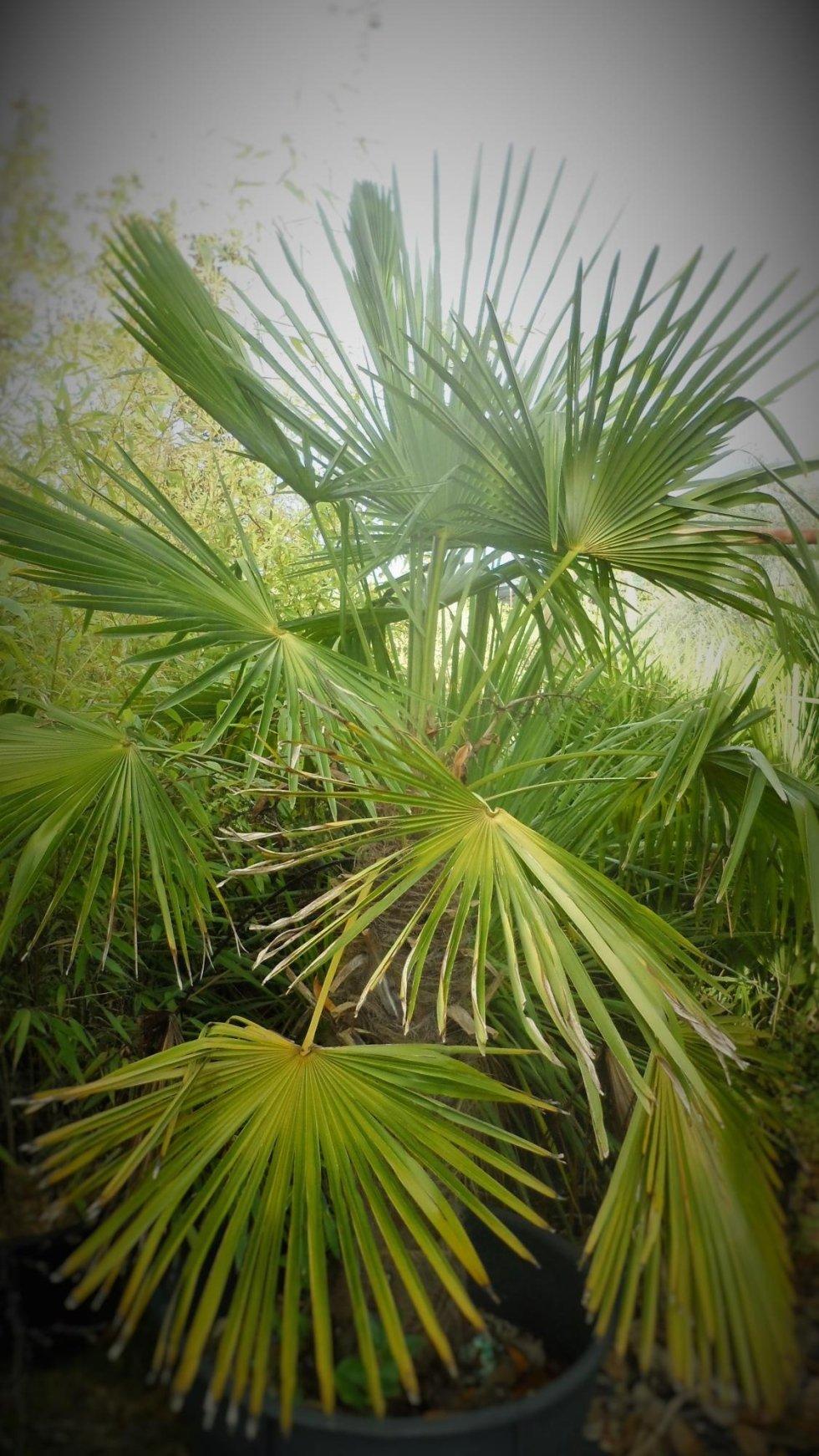 noleggio piante eventi allgreen