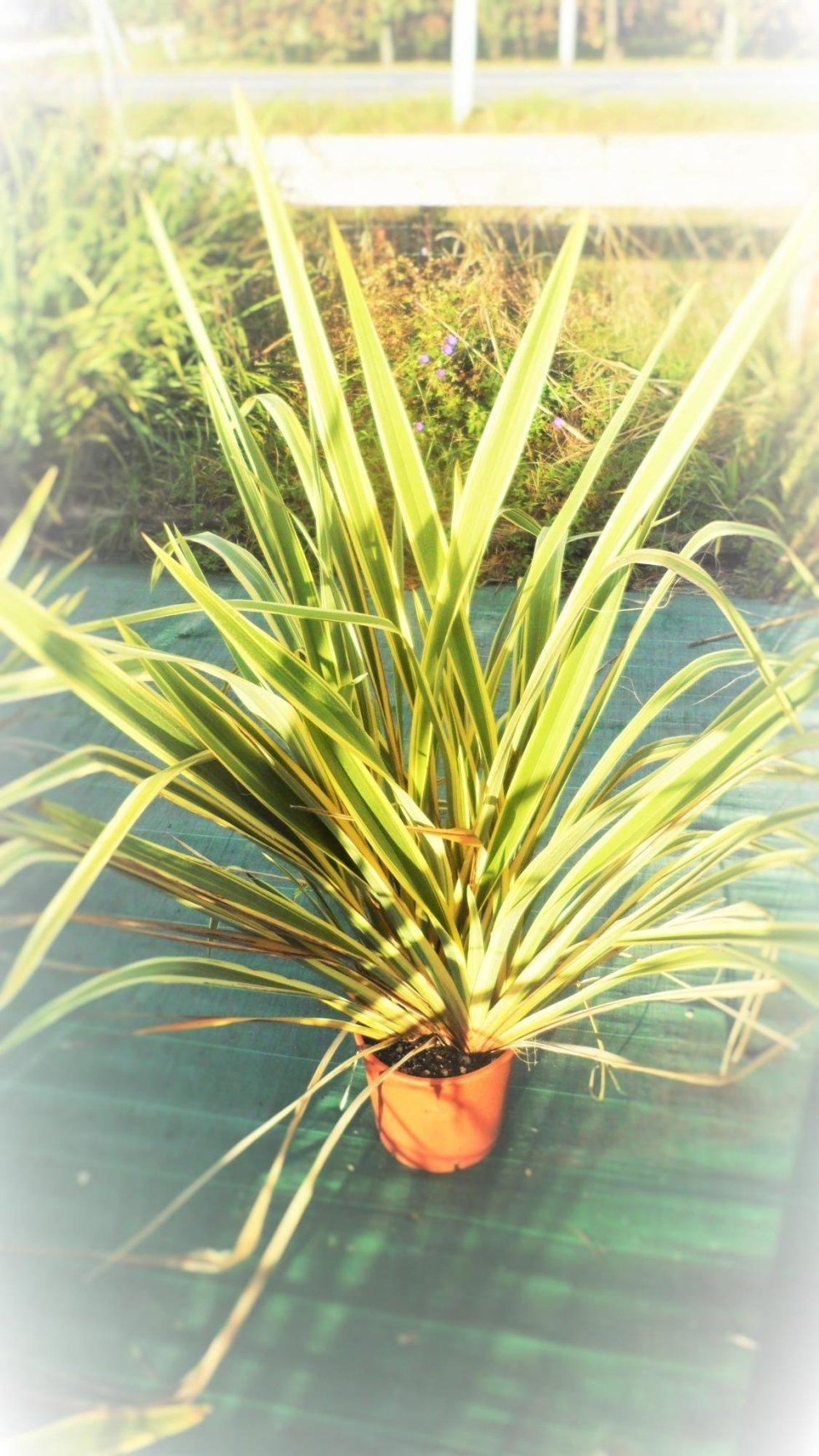 pianta per stand fiera allgreen