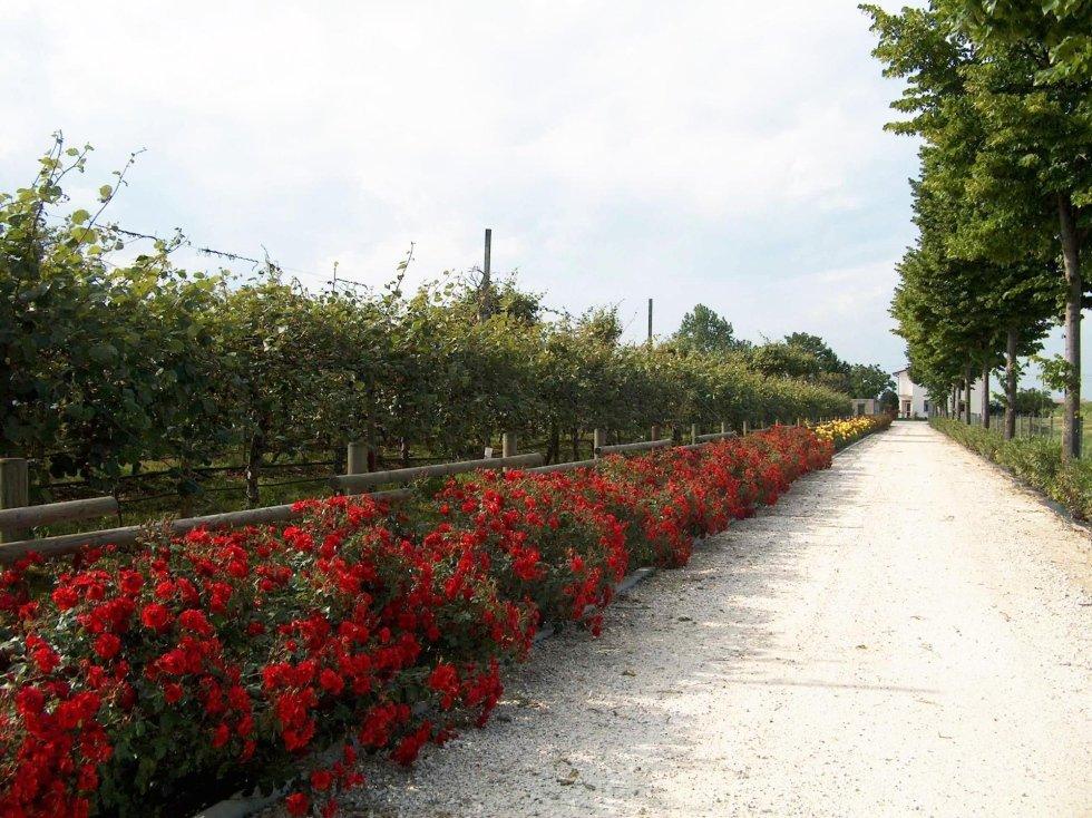 Viale Rose Rosse