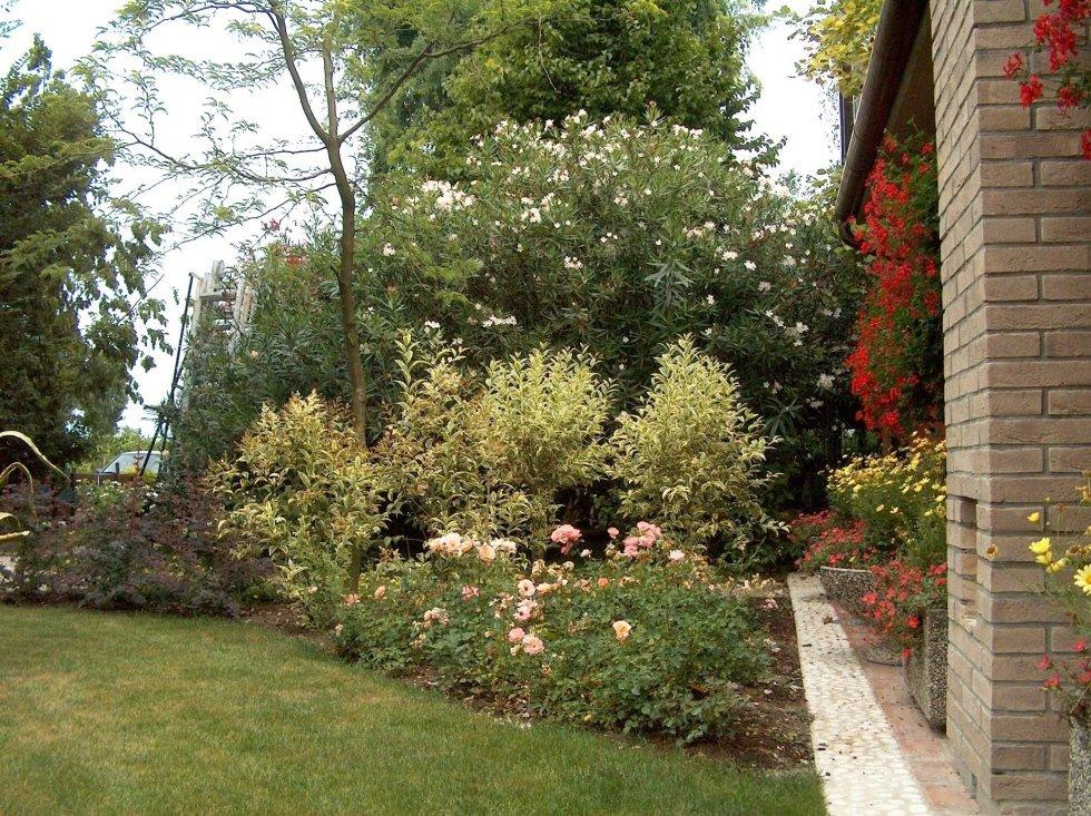 Rose Cornus Oleandro