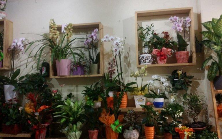 vendita, orchidee, articoli da regalo, idee regalo piante, fiori, Interflora, Addobbi Floreali, Rieti