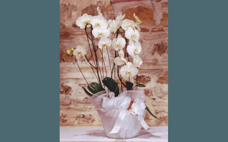 vendita, piante, fiori, orchidee, Interflora, Addobbi Floreali, Rieti