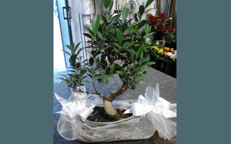 vendita, piante, fiori, bomboniere,  Interflora, Addobbi Floreali, Rieti