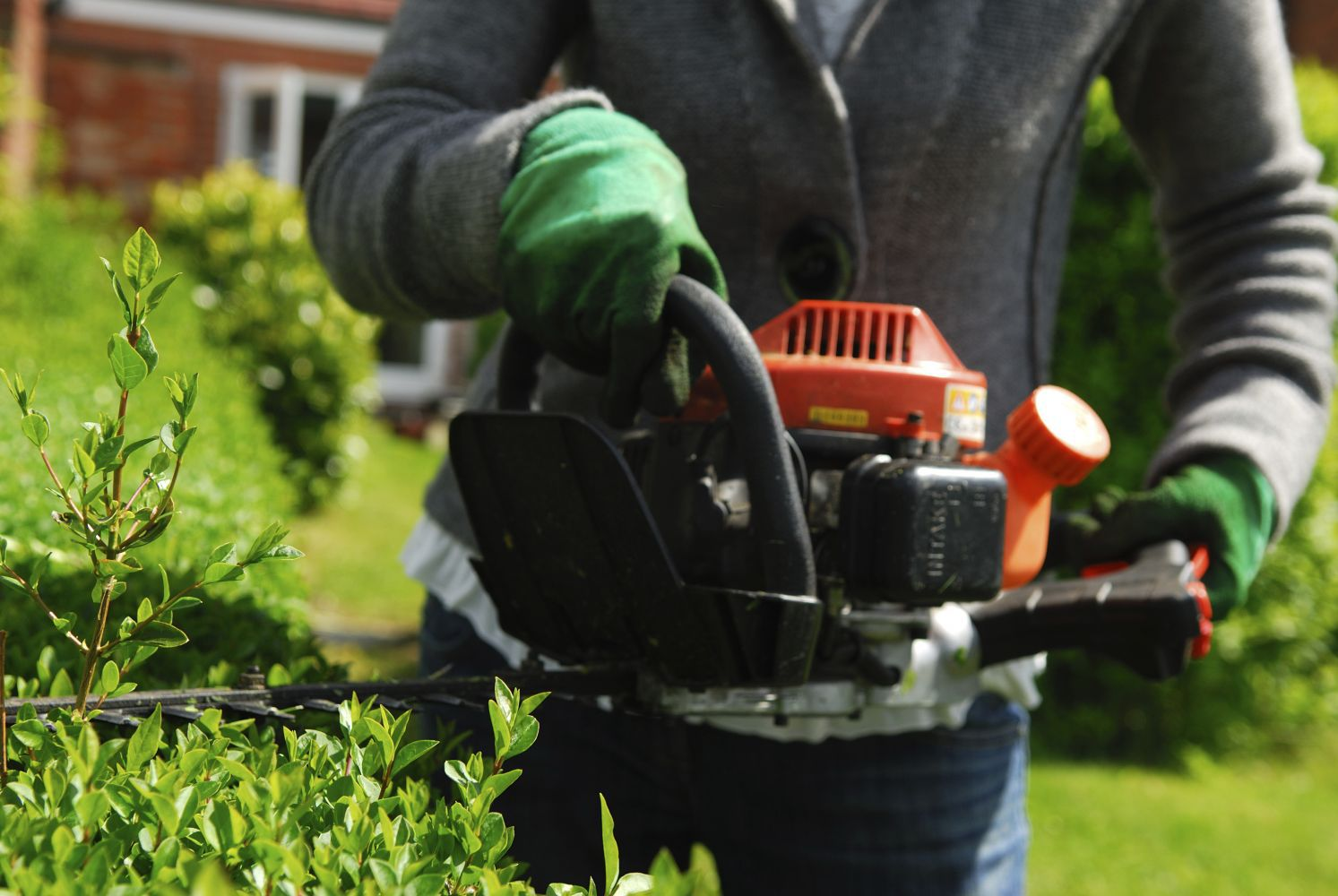 Hedge trimming in Green Island