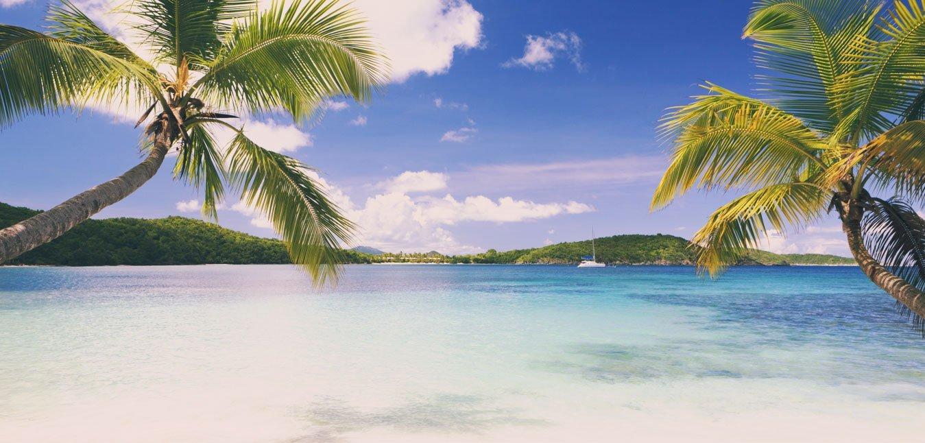 vista del mare e delle palme