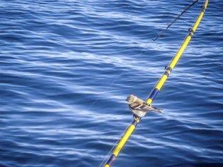 vendita canne da pesca