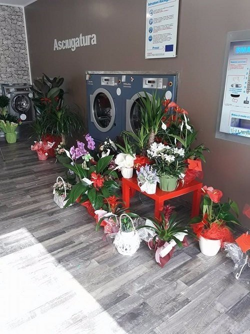 due asciugatrici e dei vasi di fiori accanto