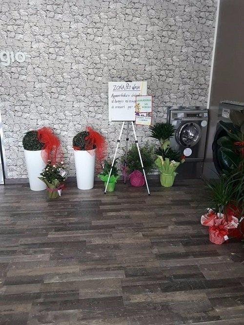 interno di una lavanderia con vasi di fiori e lavatrici