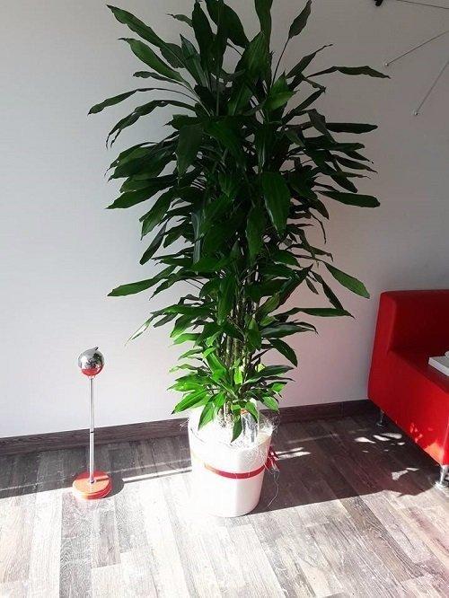 una poltrona rossa e accanto una pianta