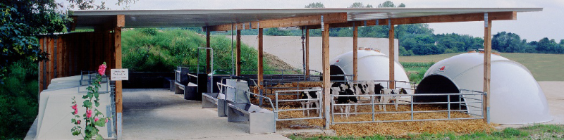 igloos for cows