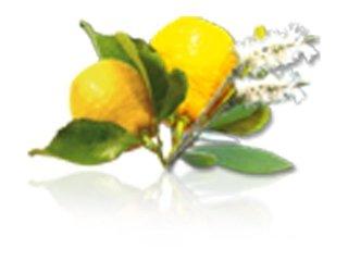 essenza limone