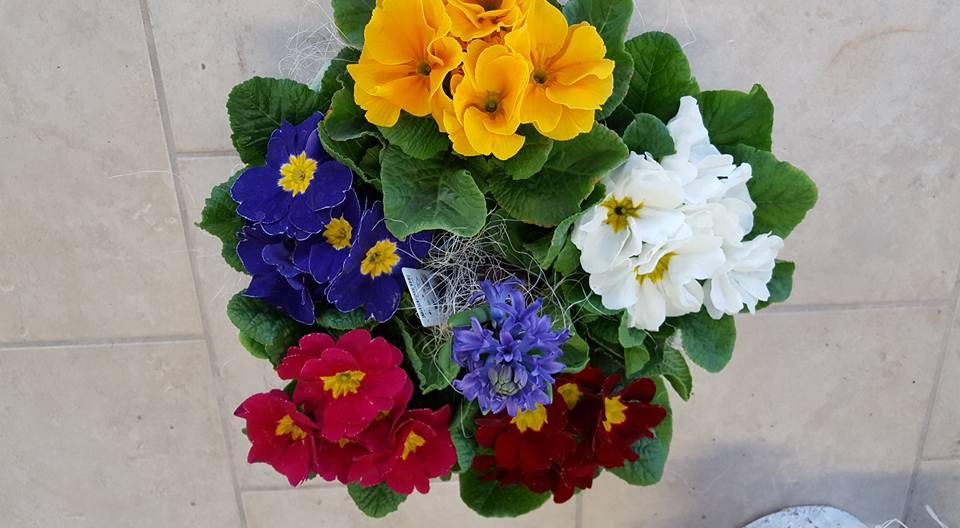 Un bouquet di fiori