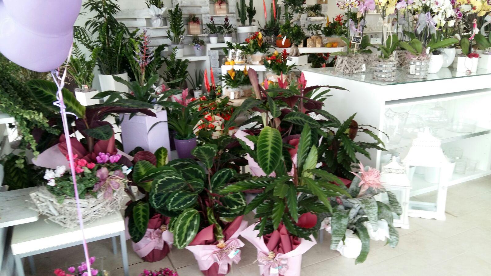 piante e fiori assortiti