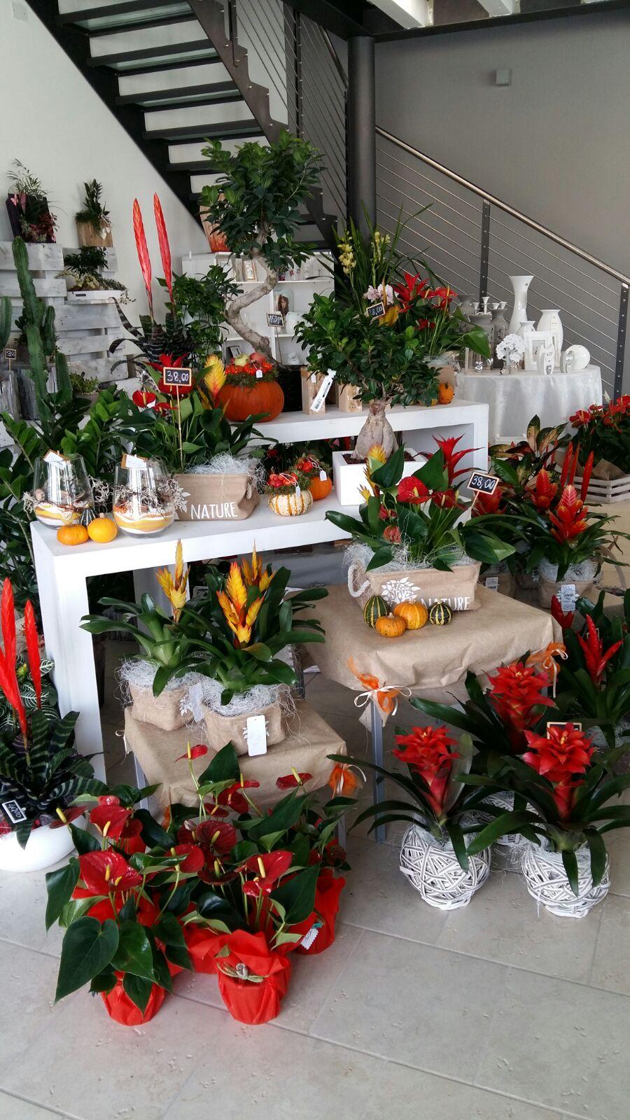 piante e fiori per tutte le ricorrenze