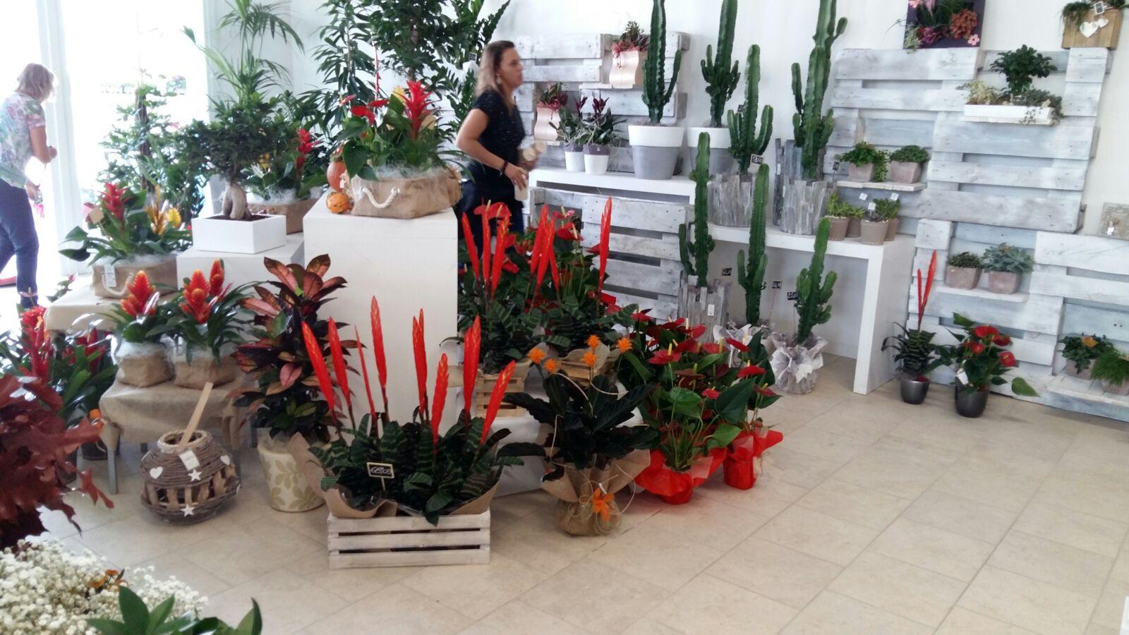 piante di tutti i tipi