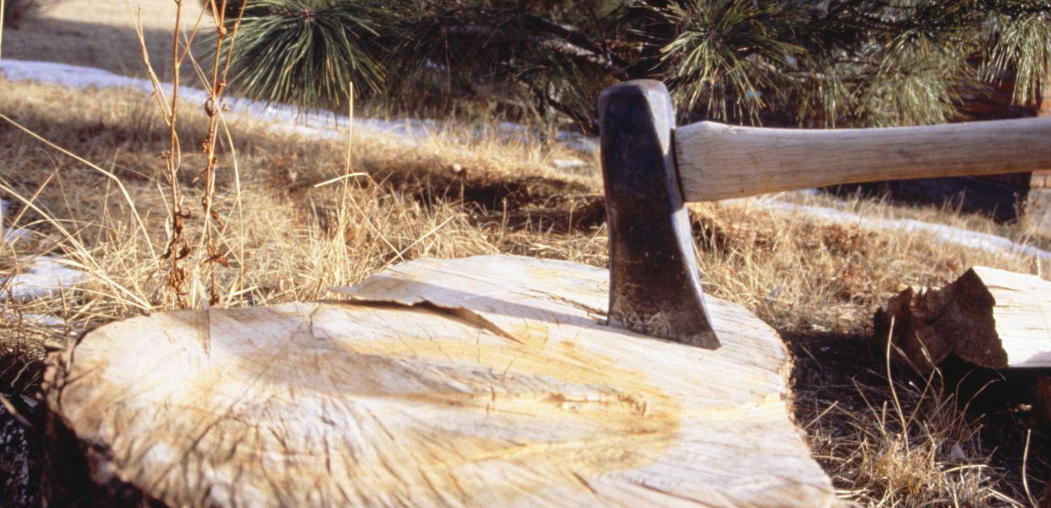 Ax in s tree stump