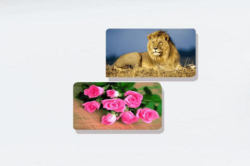 Una foto di un leone e dei fiori rosa