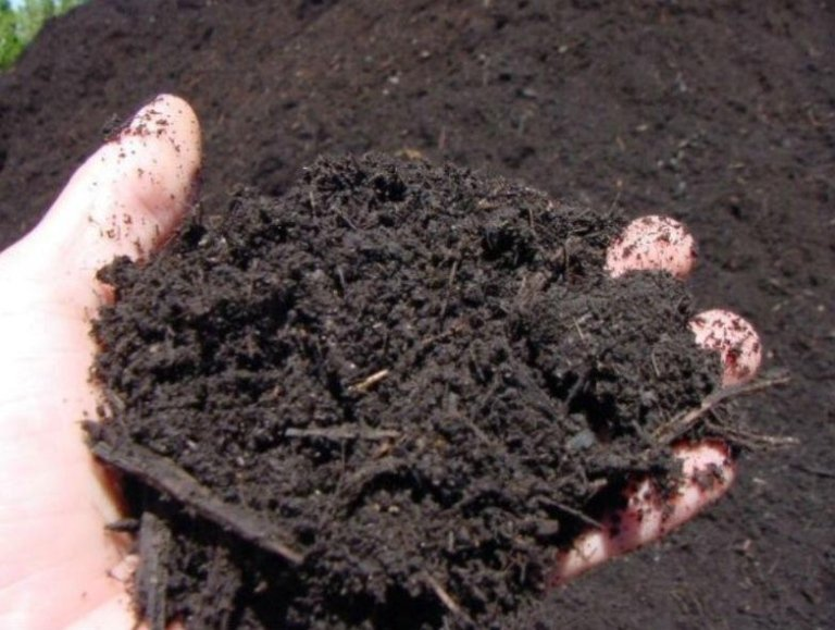 Green waste transformed into compost and ready for use