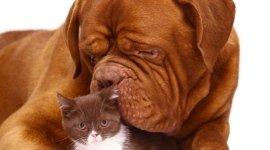 diagnosi per malattie cani e gatti