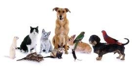 visite per animali domestici