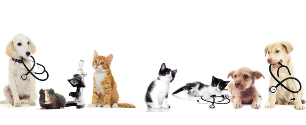 animali da curare