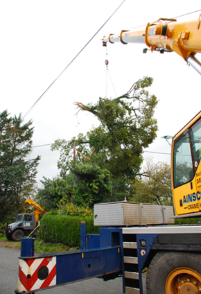 Tree being removed