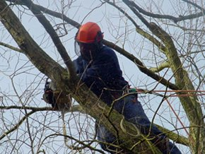 From crown thinning and reduction to dead wooding, we have a wealth of experience and knowledge to provide expert tree maintenance work.  We provide a wood chipping service and we have tracked chippers which allow us to access almost any site. We also off