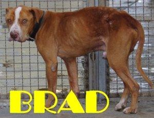 Brad: una storia a lieto fine?