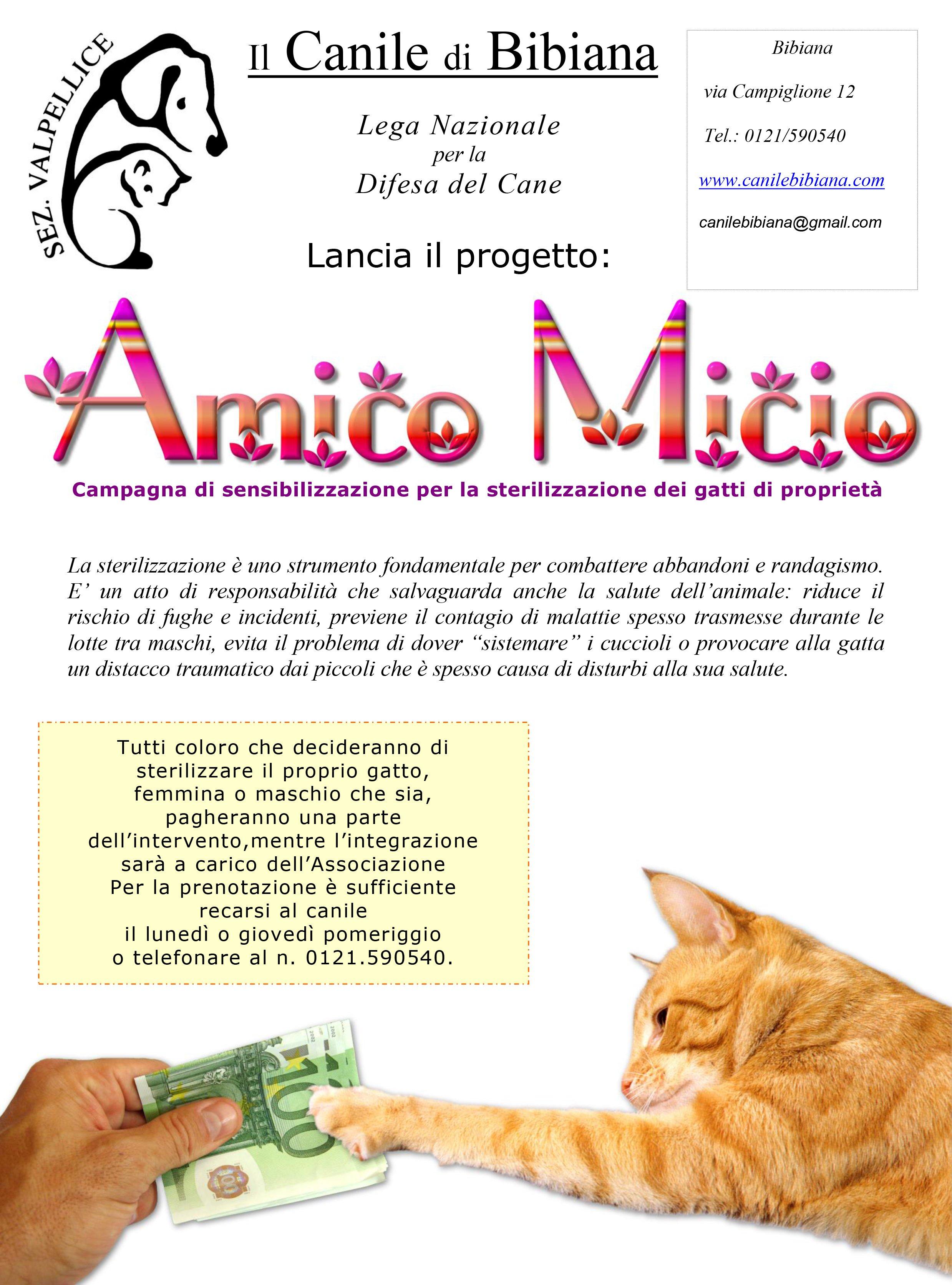 campagna per la sterilizzazione dei gatti