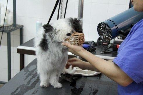 microchip per animali