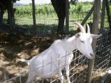 visita fattoria didattica