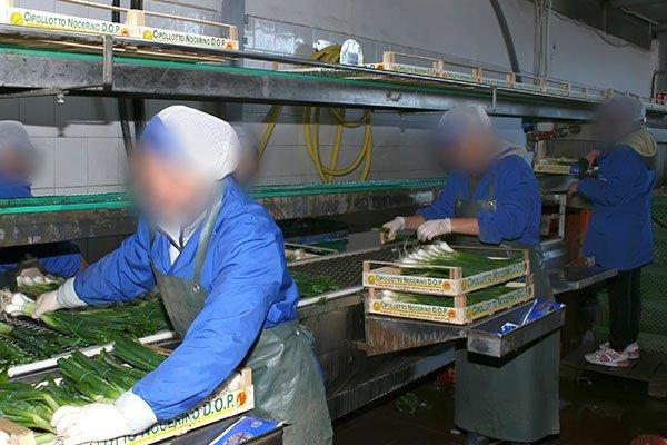 Nastro di imballaggio delle cipolle