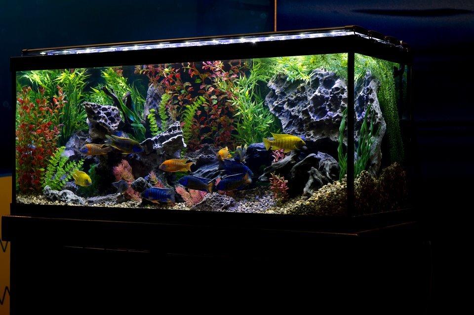 un acquario