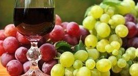 etichette vini, comprare vini