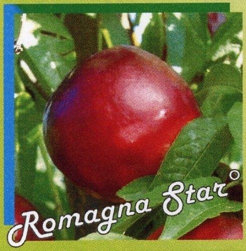Romagna star