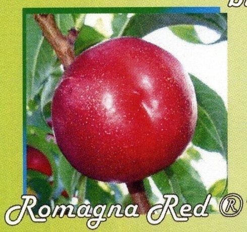 Romagna red