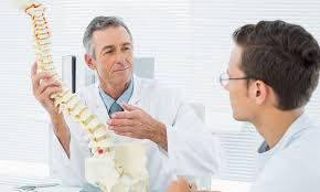 modellino di spina dorsale
