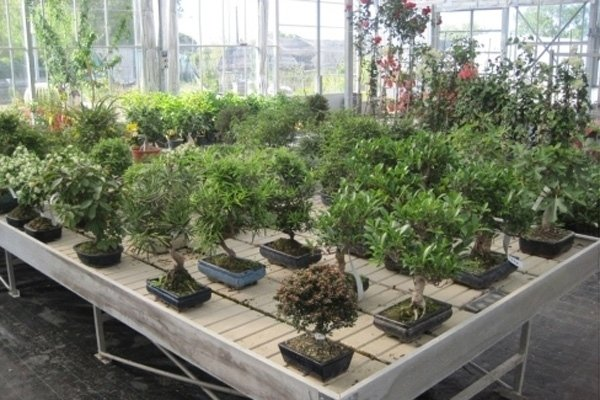 Attrezzi per bonsai