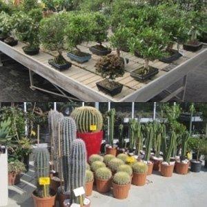 Alberi bonsai