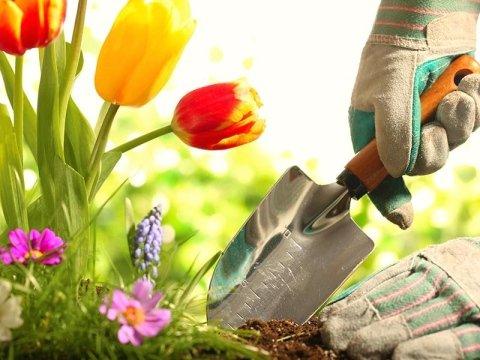 offerte giardinaggio cuneo