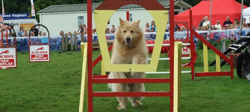 dog display show