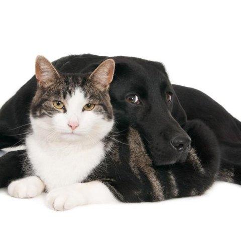 sconti prodotti per animali