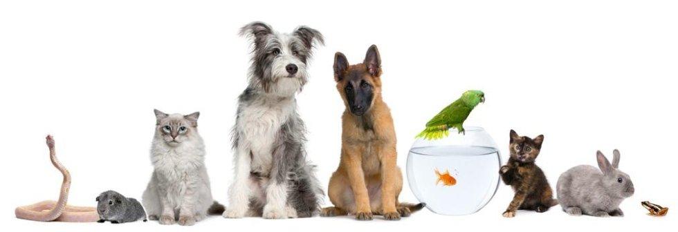 vendita piccoli animali da compagnia