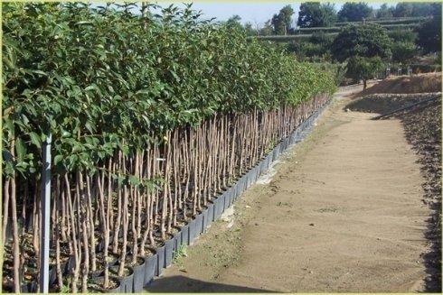 Filare di piante da frutto di ogni tipo.
